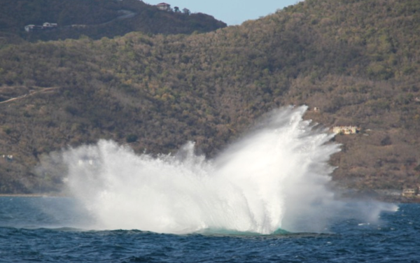 humpback whales in sir francis drake channel, BVI
